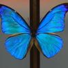 クリスタルな蝶