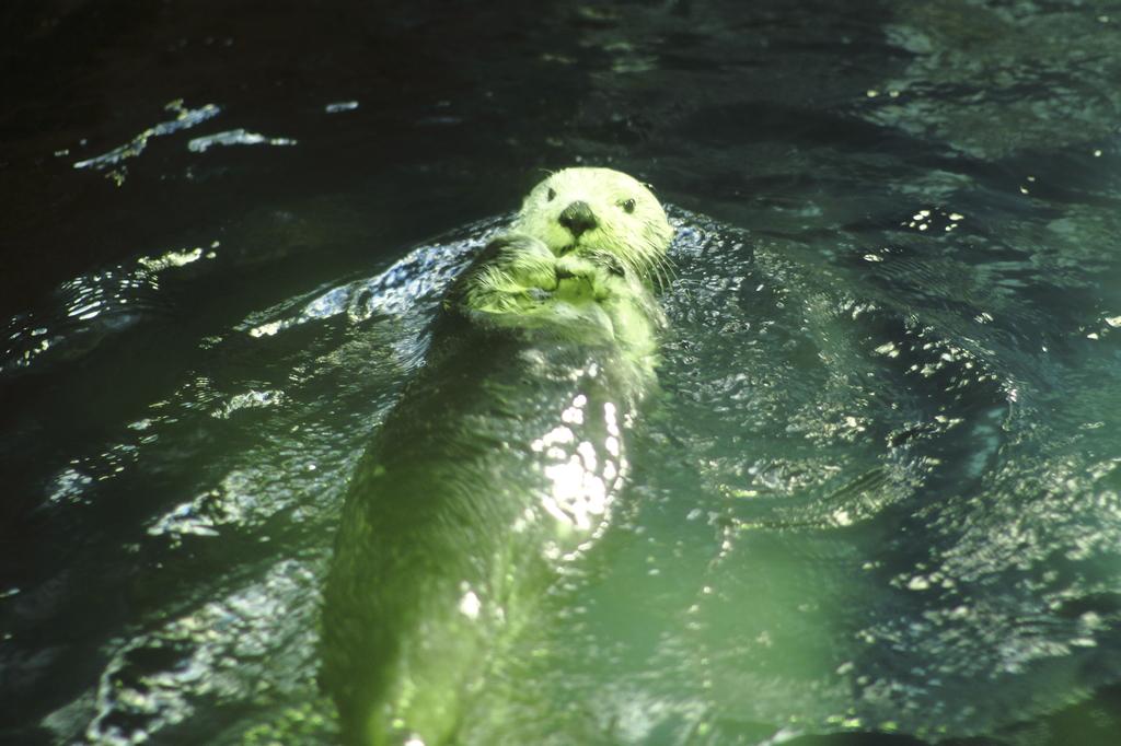 考えながら泳いでいるんです。