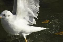 白き羽毛と水滴