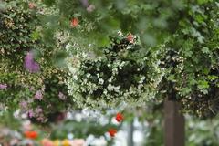 天上の花たち…。