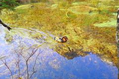 水底から透明な空へ
