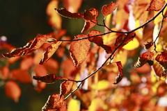 枯れ葉、そして夕陽…
