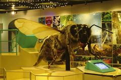 大型化する蜜蜂