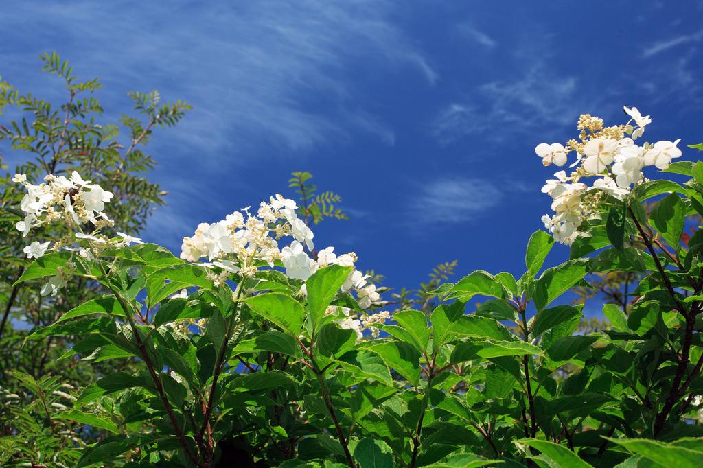 花のコーラス