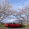 桜 DSC02500