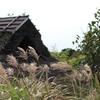 茅葺とススキと柿と秋