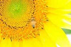 ハチ、飛び回り過ぎ^^;