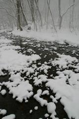 奥入瀬・冬景
