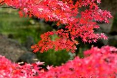 真紅な秋景