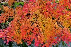 秋の色彩々