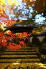 紅葉と山門