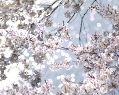 春・きらきら
