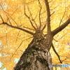 公園の秋 - 黄金色 -