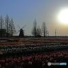早朝の花畑