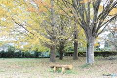 牛久自然観察の森 紅葉