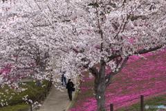 牛久浄苑・桜