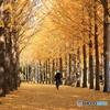 晩秋の公園模様ー走る人