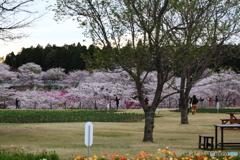 牛久浄苑・庭園