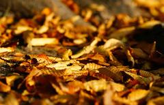 秋の根もと