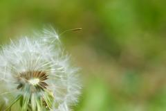 風の巣立ち