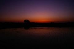 水田の夕暮れⅤ