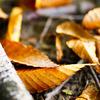 小枝と落ち葉