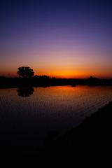 水田の夕景Ⅰ