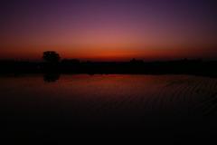 水田の夕暮れⅣ