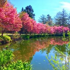 軽井沢の春