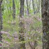 高原に来た春