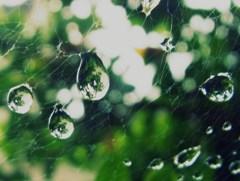 世界を纏った雫、雫を纏った蜘蛛の巣