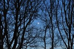月のフレーム