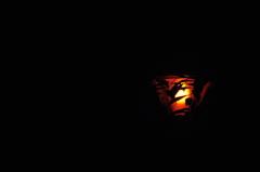 ランプに纏う葉