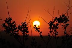太陽とトシルエットはいつだって抜群のコンビ