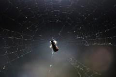蜘蛛が空の巣