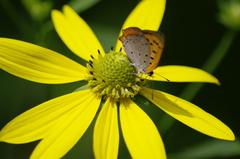 花と蝶_1