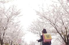 新一年生の寄り道 〜桜道〜