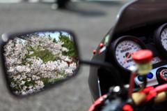 さくらバイク