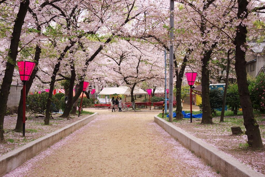 桜 高津神社