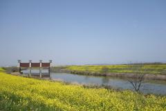 菜の花 水門のある風景 2
