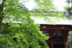 三峰神社の緑 3