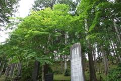 三峰神社の緑 2