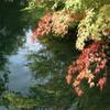 小さい秋見つけた 雲場池にて 1