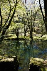 雲場池の新緑