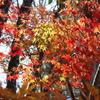 軽井沢矢ケ崎公園で見つけた秋