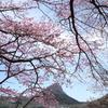 榛名湖で見つけた桜