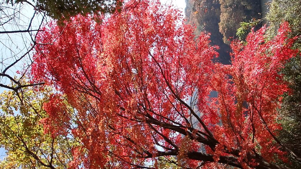 草木湖の紅葉 2