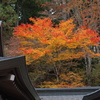 三峰神社の紅葉