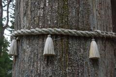 三峰神社 御神木のしめ縄