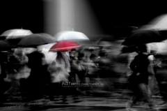 The Rainy Crossing Ⅲ
